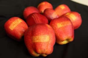 McGill apples
